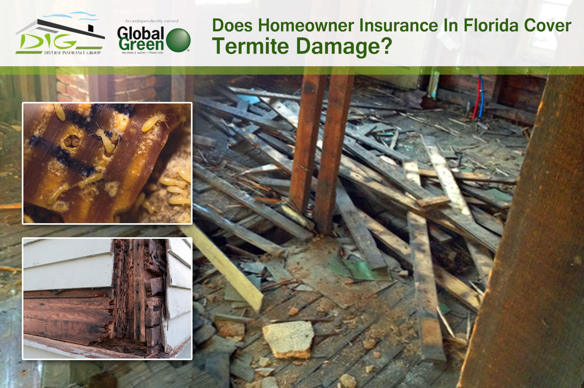 Does homeowner insurance in florida cover termite damage Homeowners insurance florida
